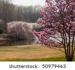 Colorful Magnolia Tree In The...