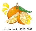 orange vector illustration | Shutterstock .eps vector #509810032