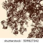 tree branches in the autumn... | Shutterstock .eps vector #509827342