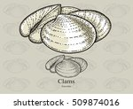 Clams. Vector Illustration For...