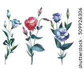 wildflower eustoma flower in a...   Shutterstock . vector #509926306