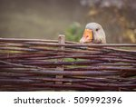 Gray Goose Behind Fence