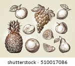collection fruits sketch. hand... | Shutterstock .eps vector #510017086