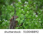Baby Queen Anne's Lace In A...