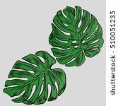 exotic flowers set. botanical... | Shutterstock .eps vector #510051235