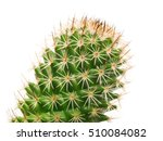 cactus and long thorns close up ... | Shutterstock . vector #510084082