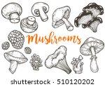 mushroom hand drawn sketch... | Shutterstock .eps vector #510120202