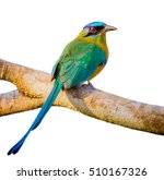 blue crowned motmot with white... | Shutterstock . vector #510167326
