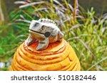 Ceramic.frog Made From Ceramic...