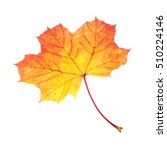 Small photo of One Maple (Acer platanoides) leaf in autumn colors isolated on white background.