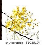 Blossom Of The Golden Shower...