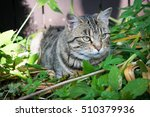 beautiful cat lying on the... | Shutterstock . vector #510379936