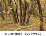 riparian forest in autumn... | Shutterstock . vector #510449632