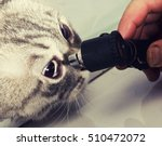 Vet Doctor Examining Pet Cat...