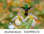 Small photo of Green Rufous-tailed Hummingbird, Amazilia tzacatl, flying next to beautiful flower, nice flowered orange green background, Costa Rica