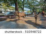 nara  japan   feb 8  2015  sika ... | Shutterstock . vector #510548722