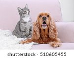 Stock photo cute dog and cat together on couch at home 510605455