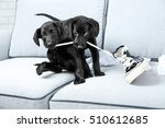 Stock photo funny labrador puppies playing with shoes on couch 510612685