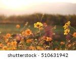 beautiful cosmos flower | Shutterstock . vector #510631942