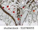 Red Apples In A White Winter...