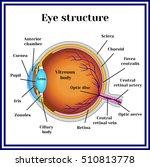 eyeball structure. | Shutterstock .eps vector #510813778