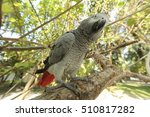 Small photo of African Gray parrot sitting on a tree branch