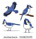 Cute Blue Jay Poses Cartoon Vector Illustration