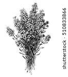 lavender flower bouquet  floral ... | Shutterstock .eps vector #510833866