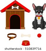 Set Of Dog Accessories