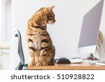 Stock photo beautiful bengal cat sitting by the computer on a table 510928822
