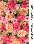 pink roses and peonies in a... | Shutterstock . vector #510947686