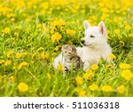 Stock photo puppy and kitten lying together on a green grass 511036318