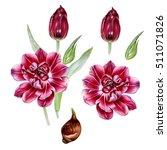 botanical illustration of pink... | Shutterstock . vector #511071826