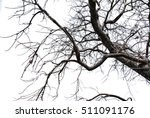 Dry Tree Isolated On The White...