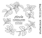 stevia herb vector set on white ... | Shutterstock .eps vector #511114798