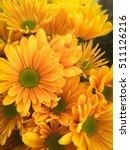 beautiful yellow gerbera... | Shutterstock . vector #511126216