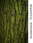 Green Bark On Tree Trunk Close...