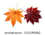 autumn maple leaves | Shutterstock . vector #511290082