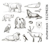 vector sketches of animals... | Shutterstock .eps vector #511298236