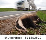 dead badger on road killed by... | Shutterstock . vector #511363522