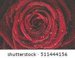 Red Rose Dew Closeup Photo...