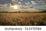 Golden Field With Clouds On A...