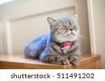 a cat | Shutterstock . vector #511491202