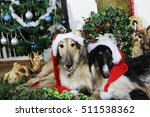 two borzoi puppies dressed up... | Shutterstock . vector #511538362