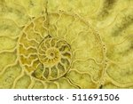 Small photo of Great ammonite shell viewed in section, revealing the internal chambers and septa. Large polished examples are prized for their aesthetic, and scientific, value. Creative background photography.