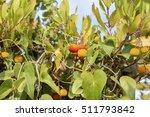 irish strawberry tree | Shutterstock . vector #511793842