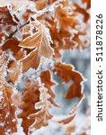 Rime Oak Leaves Winter...
