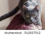 Stock photo ambush cat jumping on me 512027512