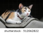 Thai Three Color Cute Cat Stay...