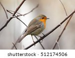 Little Bird Robin Sitting In...